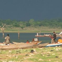 Trees and fishermen, Dambai, Volta Lake