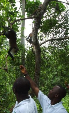 Tafi Atome monkey sanctuary