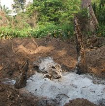 Forest cleared for yam production4