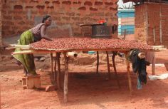 Drying cocoa