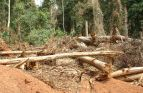 Forest damage