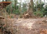 Forest damage