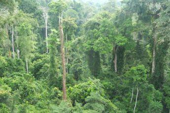 kakum forest 1