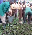 Tree seedlings to plant at school, Sibi Hilltop