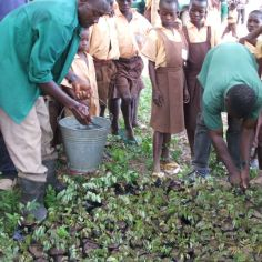 Tree seedlings to plant at school, Sibi Hilltop