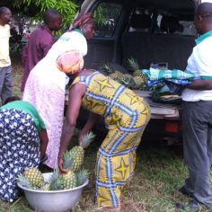 Women at Tafi Abuipe sending us home with pineapples from their organic pineapple farm