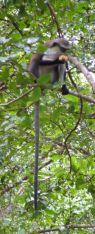 Tafi Atome monkey sanctuary