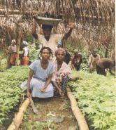 Community tree nursery