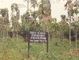 Afforestation project