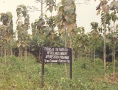 Afforestation project