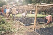 At work in the community tree nursery