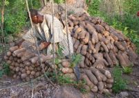 Best farmer's yam store