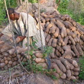 Best farmer's yam store