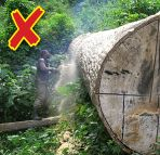 illegal forest practices