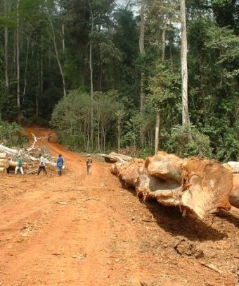 logging road in the forest