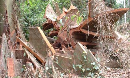 wood offcuts