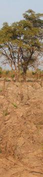 yam farm nth ghana1