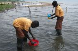 Sampling for monitoring the water quality at Lake Bosumtwe