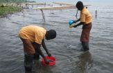 Sampling for monitoring the water quality at Lake Bosumtwe